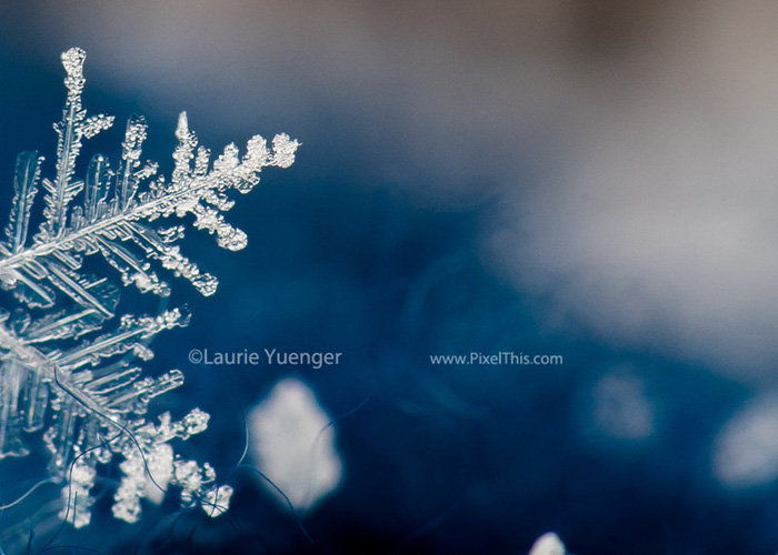 how-to-take-pictures-of-a-snowflake