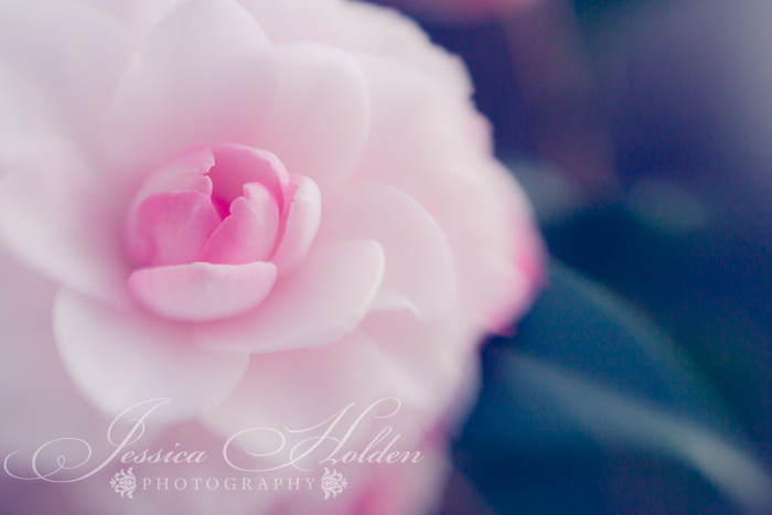Find my photography style